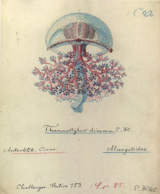 medusa | Omhoog | Tijdschrift Terras