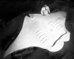 Mr. Bell working on Devil Fish Manta exhibit   Tijdschrift Terras