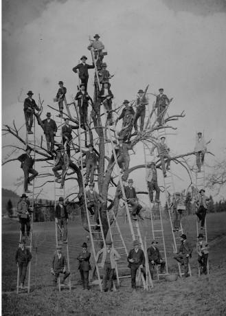boomsnoei, Zwitserland, datum onbekend - Tijdschrift Terras