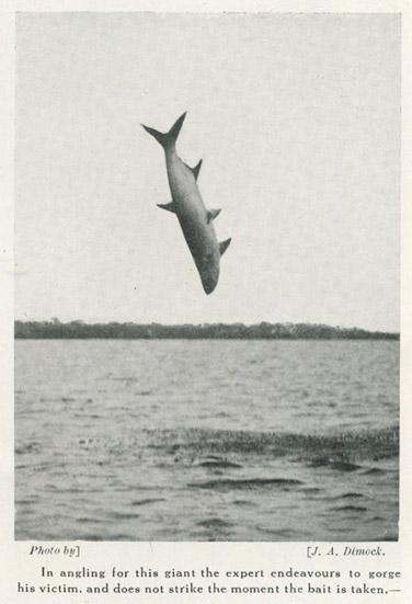 vliegende vis | Omhoog | Tijdschrift Terras